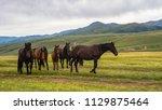 horses at mountain meadows ... | Shutterstock . vector #1129875464