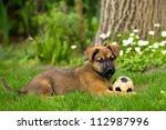 Stock photo dog playing 112987996