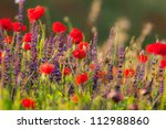 scenery with wild poppy and...   Shutterstock . vector #112988860