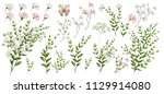 watercolor illustration.... | Shutterstock . vector #1129914080
