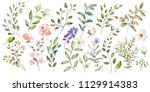 watercolor illustration.... | Shutterstock . vector #1129914383