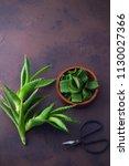 aloe vera on dark background  ... | Shutterstock . vector #1130027366