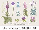 set garden flowers. classical... | Shutterstock .eps vector #1130103413