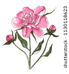 one peony flower with buds | Shutterstock . vector #1130118623