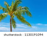 coconut palm tree  | Shutterstock . vector #1130191094