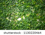 green leaf on wall background | Shutterstock . vector #1130220464