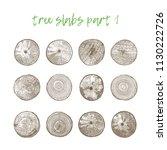 set of 12 realistic tree slice... | Shutterstock .eps vector #1130222726