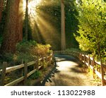 Beams In Sunny Forest