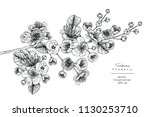 sketch floral botany collection.... | Shutterstock .eps vector #1130253710