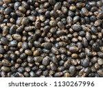 castor beans background | Shutterstock . vector #1130267996