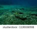 fish under the aegean sea off... | Shutterstock . vector #1130338508