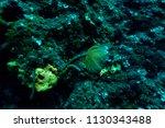 sea life of the aegean sea off... | Shutterstock . vector #1130343488