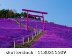scenery of phlox subulata in... | Shutterstock . vector #1130355509
