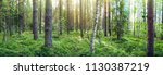 forest landscape with a... | Shutterstock . vector #1130387219