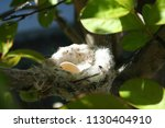 Hummingbird Nest With Egg In A...