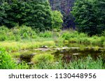A View Of A Small Pond Located...