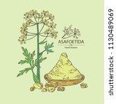 asafoetida  plant  asafoetida... | Shutterstock .eps vector #1130489069