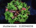 tropical pitcher carnivorous...   Shutterstock . vector #1130548358