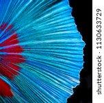 halfmoon betta fish  siamese... | Shutterstock . vector #1130633729