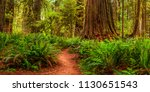 Panorama Of A Hiking Trail In...