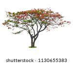 tree dicut at isolated on white ... | Shutterstock . vector #1130655383