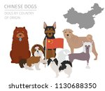 dogs by country of origin.... | Shutterstock .eps vector #1130688350