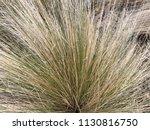 brown grass background | Shutterstock . vector #1130816750