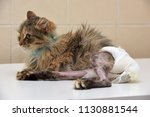 sick cat who suffered an injury ... | Shutterstock . vector #1130881544