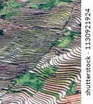 rice fields on terraced. fields ... | Shutterstock . vector #1130921924