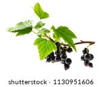 blackcurrant on the branch | Shutterstock . vector #1130951606