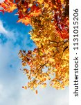 autumn leaves in the blue sky | Shutterstock . vector #1131015206