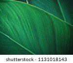 beautiful of palm tropical... | Shutterstock . vector #1131018143