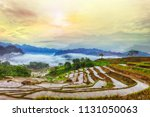 Terraced Rice Field In Water...