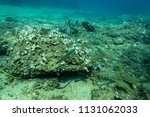 fish at the bottom of the... | Shutterstock . vector #1131062033