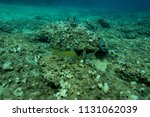 fish at the bottom of the... | Shutterstock . vector #1131062039