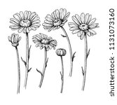 daisy flower drawing. vector... | Shutterstock .eps vector #1131073160