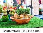small decorative buxus... | Shutterstock . vector #1131115106