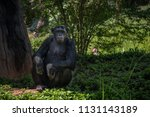 Chimpanzee Intelligent Monkey...