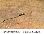 parched dry grass garden lawn ... | Shutterstock . vector #1131156326