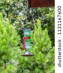 glass hummingbird feeder with... | Shutterstock . vector #1131167600