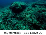 sea grass at the bottom of the... | Shutterstock . vector #1131202520