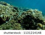 the bottom of the aegean sea... | Shutterstock . vector #1131214148
