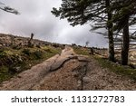 rainy day with fog and clouds... | Shutterstock . vector #1131272783