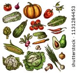 vegetables and natural veggies... | Shutterstock .eps vector #1131284453