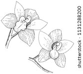 orchids in a vector style... | Shutterstock .eps vector #1131288200