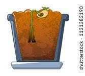 Bean In Ground Germinated Icon...