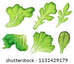 a set of salad leaf illustration | Shutterstock .eps vector #1131429179