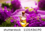 tea tree oil in the amber glass ... | Shutterstock . vector #1131436190