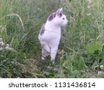 black and white cat in grass... | Shutterstock . vector #1131436814