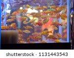Stock photo this pic show a lot of ornamental fish swimming in aquarium fish at pet shop ornamental fish 1131443543